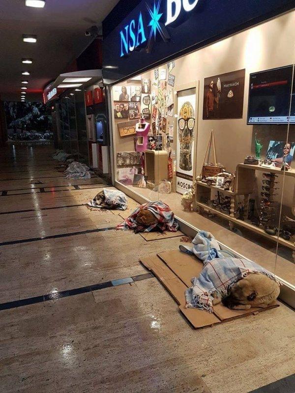 """""""Phép lạ"""" mùa giá lạnh cho những chú chó hoang ở Istanbul.(Ảnh: CNN Turks)"""