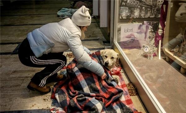 Những người dân tốt bụng mang chăn cũ đến cho những người bạn bốn chân.(Ảnh: CNN Turks)