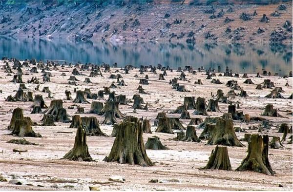 Những cây cổ thụ hàng trăm năm tuổi ở Oregon, Hoa Kỳ bị đốn hạ trong vòng một đêm để xây đê.