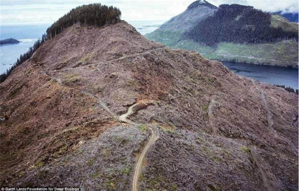 Và rồi, những ngọn đồi xanh rì cây phủ sẽ không còn nữa, thay vào đó là màu nâu cằn cỗi đến đau lòng.