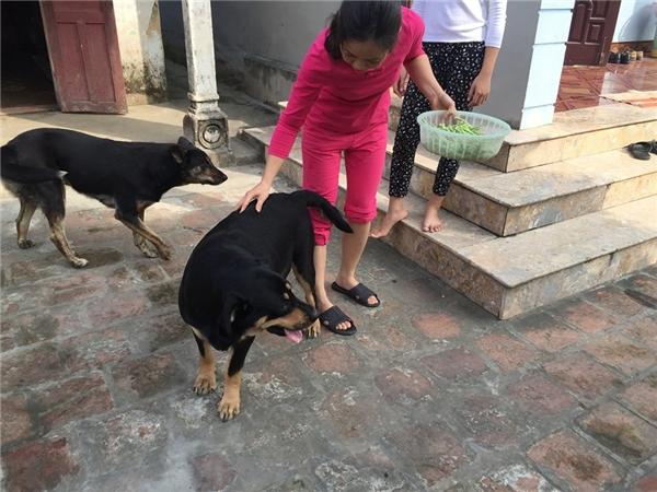 Hình ảnh khác của chú chó trung thànhMia.(Ảnh: NVCC)