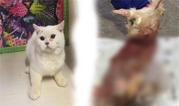 Bà Thịnh nhận ra chú mèo này chính là con vật đã được bán cho nữ khách hàng kì lạ cách đó vài ngày. Bà chủ vô cùng hoang mang vì trước đấy chưa từng quen biết hay gây thù chuốc oán gì với cô gái này, không hiểu vì lí do gì mà cô ta lại hành động độc ác như vậy.