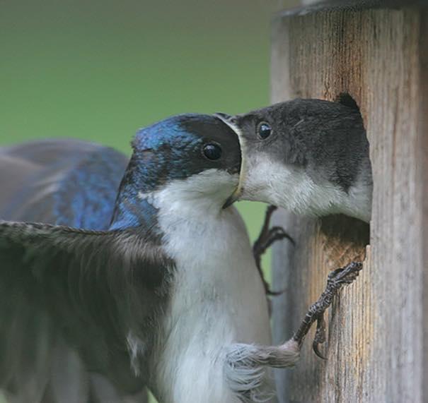 Minh chứng của những cặp đôi hôn nhau mà như muốn... nuốt trọn.