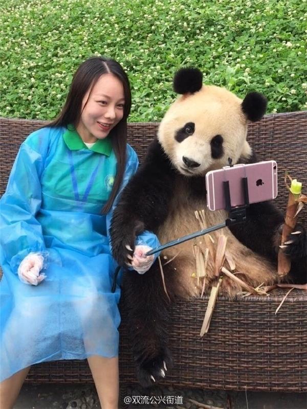 Ai bảo gấu trúc thì không biết selfie cơ chứ?
