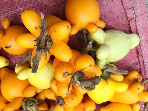 """Phần """"thịt dư"""" của trái dư trông giống một hoa mai. (Ảnh: Internet)"""