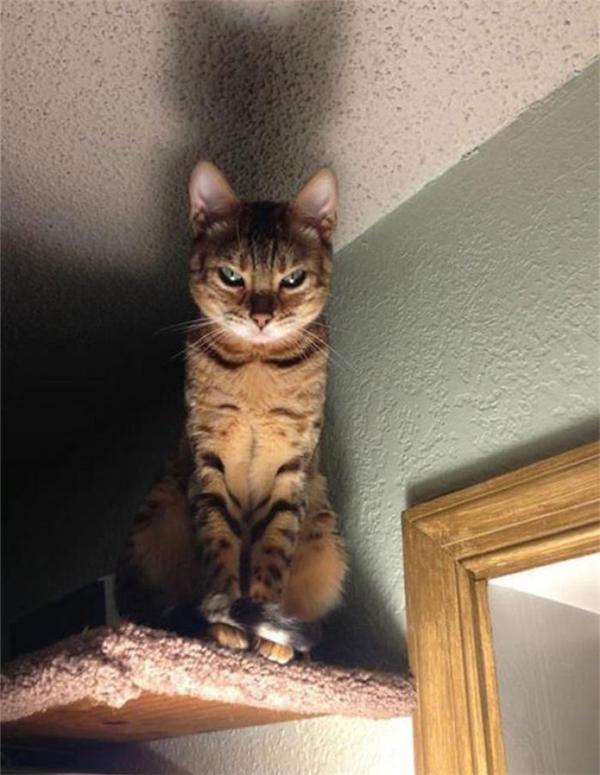 Đêm đang ngủ mà gặp quả mèo vàng giận dữ thế này thì chắc em cũng tiêu mất.