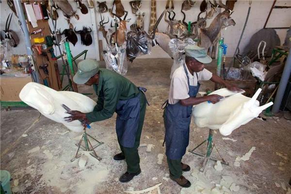 Các công nhân đang chỉnh sửa phần bọt xốp sao cho lớp da con vật có thể được đắp lên vừa khít và trông thật hết mức có thể.
