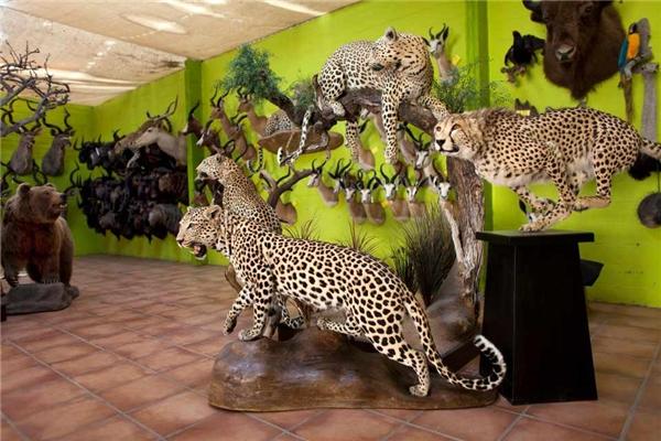 Tại xưởng có đến 35 con vật phổ biến nhất được đăng tải công khai bảng giá gồm voi, các con thú lớn thuộc họ mèo, tê giác và hươu cao cổ.
