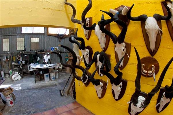 Bên cảnh thảm và xác nhồi, các con vật cũng có thể được làm thành những món đồ trang trí treo tường.
