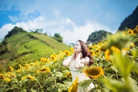 Vườn hoa hướng dương nằm ở Tiểu khu 67 nông trường Mộc Châu. Ảnh: Internet.