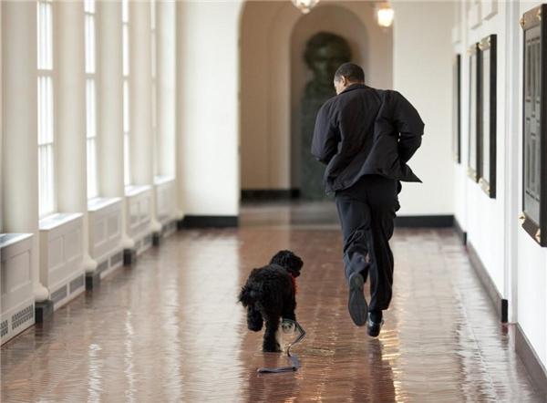 Tổng thống đùa giỡn cùng chú chó Bo, chú chó thuộc giống Bồ Đào Nha là món quà của vợ chồng Thượng nghị sĩ Ted Kennedy đến hai người con gái của vị tổng thống.