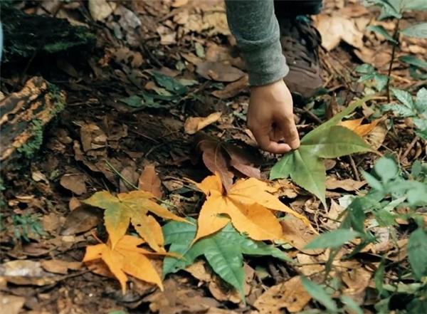"""…và tìm kiếm 7 chiếc lá phong màu sắc khác nhau để """"hóa giải lời nguyền"""" cho thành viên """"hóa hổ""""."""
