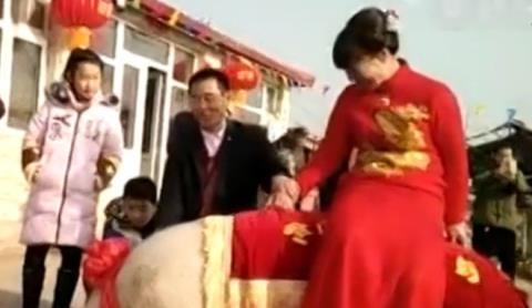 Độc đáo cô dâu cưỡi lợn 756kg vào phòng tân hôn