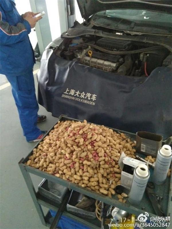 """Chủ nhân của chiếc xe đã phải tới trung tâm bảo dưỡng để dọn dẹp toàn bộ """"của cải"""" của chú chuột."""