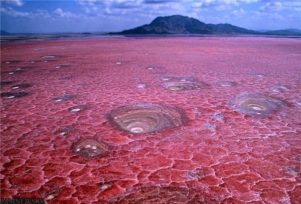 Nằm ở phía Bắc Tanzania, hồ Natron mang vẻ đẹp kì ảo với màu đỏ tươi như máu tạo bởi cácloài vi khuẩn đặc biệt.Nó còn được mệnh danh là hồ tử thần khi có thể khiến các sinh vật bước vào bị hóa đá đầy bí ẩn.