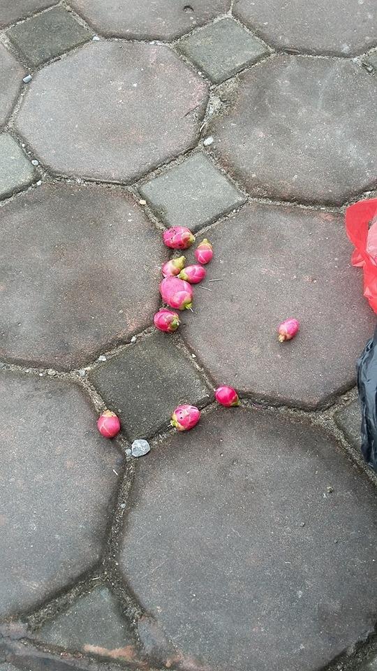 Và tất cả nụ hoa đều được gắn trực tiếp chứ không phải mọc ra từ thân cây một cáchtự nhiên.(Nguồn: NVCC)