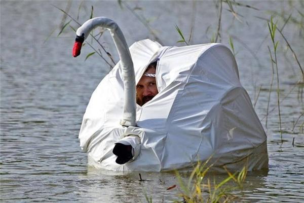 Một nhiếp ảnh gia ngụy trang hình thiên nga nằm phục dưới nước hàng giờ đồng hồ liền để bắt lấy những khoảnh khắc hoang dã ấn tượng nhất, (Ảnh: internet)