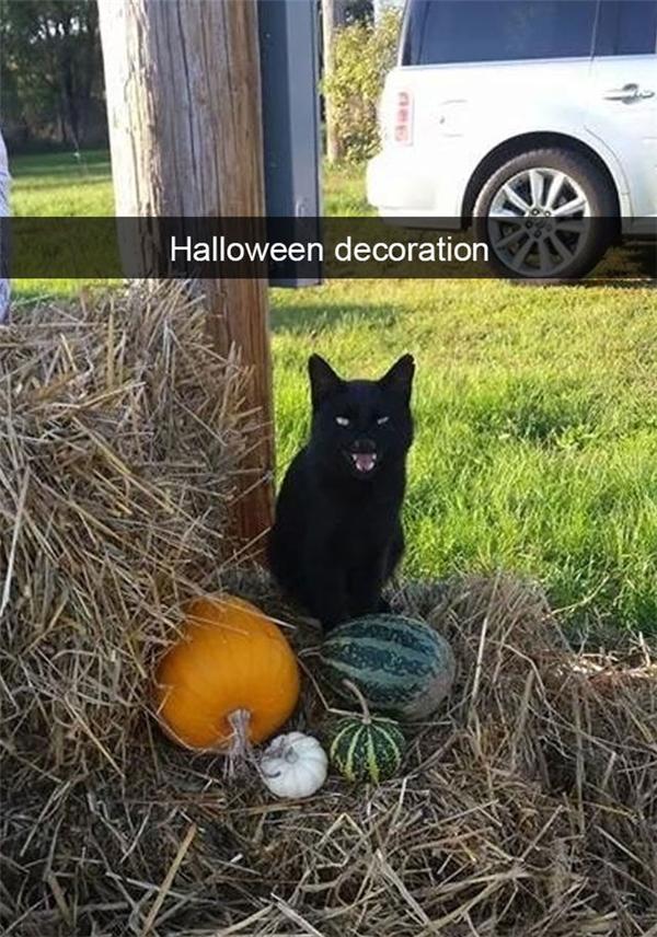 Đồ trang trí Halloween.