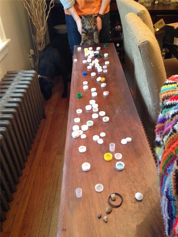 Trong khi dọn nhà, sen nó phát hiện ra cả một kho tàng nắp chai mà nó trộm và giấu trên trần nhà bấy lâu nay.