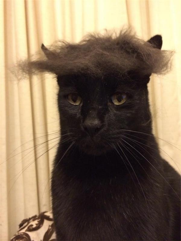 Khi bạn chải lông cắt tóc cho nó xong xuôi và nó nhất quyết không để cho bạn quẳng cái mớ lông tóc ấy đi.