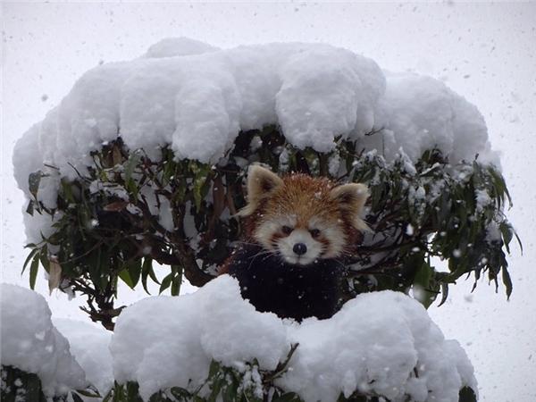 Tình hình tuyết rơi mờ mắt thế này, có được một chỗ trú để không bị chôn vùi trong tuyết là may mắn lắm rồi.