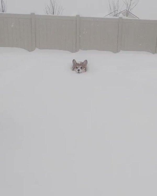 Tuyết thì dày, chân thì ngắn, giờ biết phải làm sao?