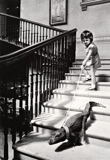 Một em bé đang dẫn thú cưng đi dạo là con cá sấu nhỏ.