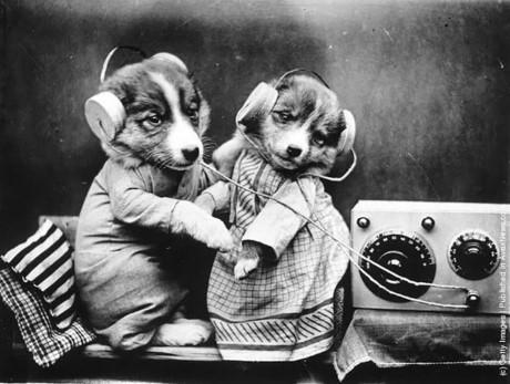 Hai chú cún con tạo dáng vô cùng đáng yêu.