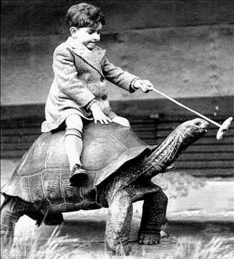 Một bé trai cưỡi rùa và dụ rùa đi bằng thức ăn.