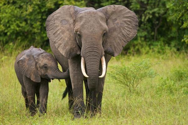 Người Đan Mạch thì gọi @ làsnabel có nghĩa là vòi con voi. (Ảnh: internet)