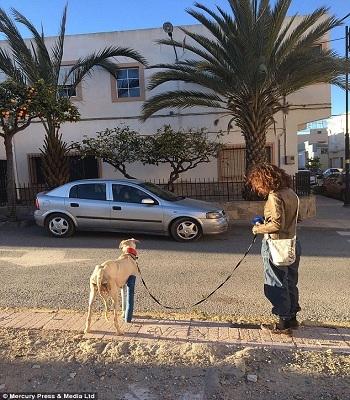 Chó mẹ gãy chân vẫn vượt hơn 3km tìm người cứu đàn con