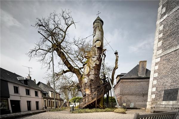 Cây sồi ngàn năm tuổi vẫn còn đứng sừng sững trong một nhà nguyện ở Pháp.