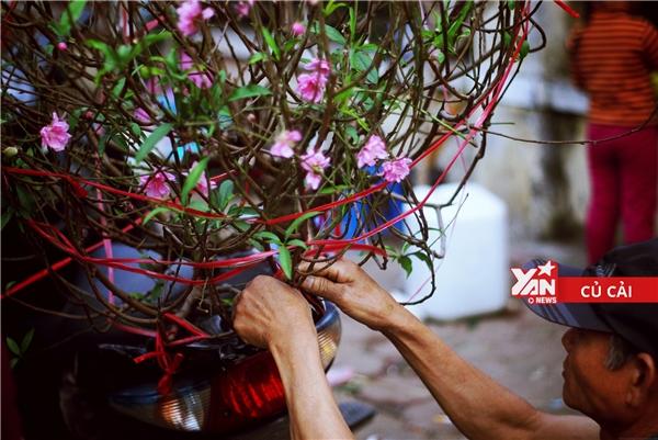 Bán được cành đào với giá khá mềm, người đàn ông trung tuổi còn cẩn thận buộc chặt cành hoa vào xe cho khách. Hành động nhỏ xíu, giản dị thế thôi nhưng ấm áp tình người biết bao.