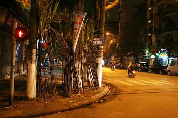 Không khó để bắt gặp các cành mía ngọt dựng khắp phố phường Hà Nội từtối 30 Tết.
