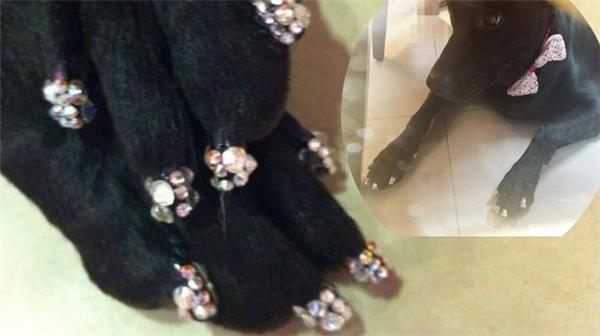 Gato với cún cưng được làm nail sang chảnh đón Tết