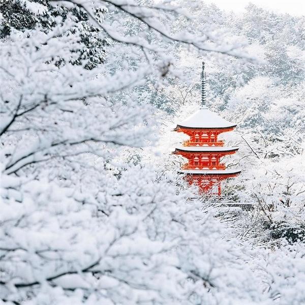 Cầu thang, tán cây đều đượcphủ đầy màn tuyết trắng.
