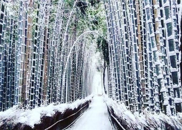 Tuyết đọng trên lối đi vào rừng tre Sagano.