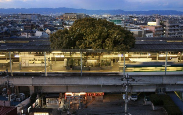 Trạm Kayashima ở Neyagawa với cây đại thụ mọc ngay giữa. (Ảnh: Oddity Central)