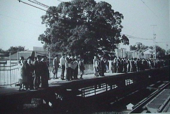 Cây đại thụ là chiếc ô khổng lồ che cho người đợi tàukhi trời nắng gắt hay mưa rào hồi năm 1910.(Ảnh: Oddity Central)