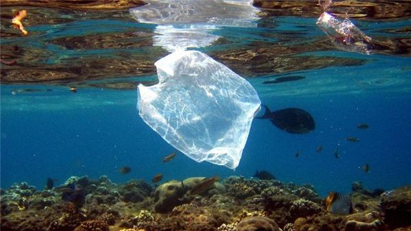 Đau lòng phát hiện chú cá voi với dạ dày chứa toàn rác thải nhựa