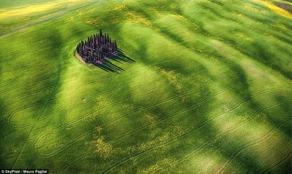 Tác giả Mauro Pagliai đạt giải nhì thể loại vẻ đẹp đam mê với tác phẩm tên Sóng xanh, ghi lại hình ảnh một vùng đồng bằng nước Ý.