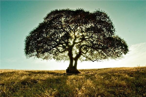 Nếu bạn nhìn thấy hình ảnh cái cây từ bức tranh bạn bạn quả là người rất tinh ý.