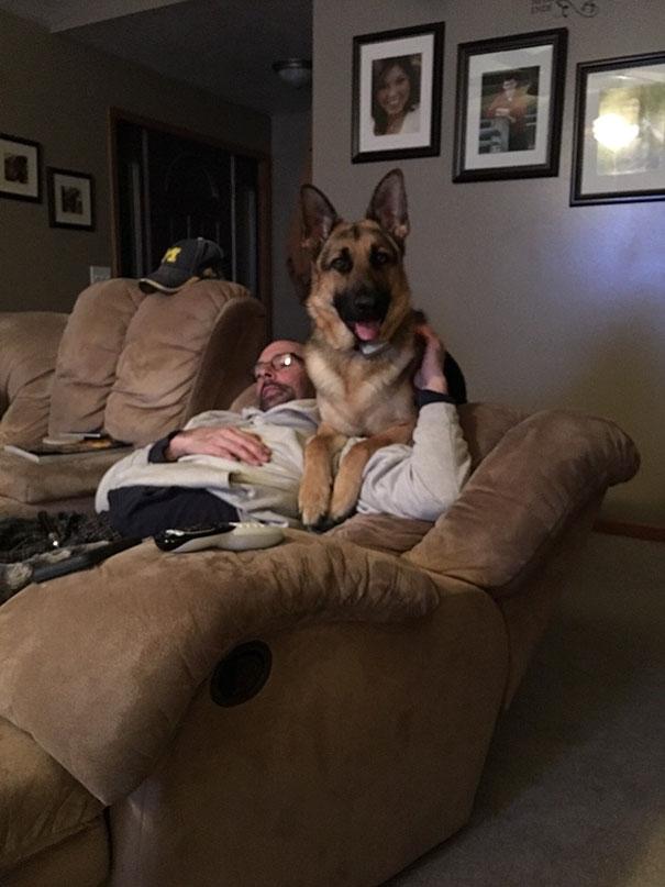 Năn nỉ dữ lắm bố mới cho nuôi chó. Nhưng ổng cấm cho chúng leo lên sofa.