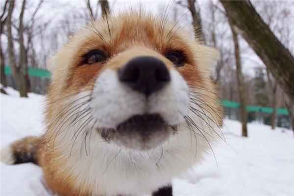 Thế nhưng, có mấy ai lại đành lòng đứng ngắm những sinh vật đáng yêu muốn khóc thế này mà không được vuốt ve chúng.
