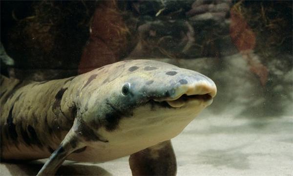 Ông cá phổi 90 tuổi già nhất thế giới vừa qua đời