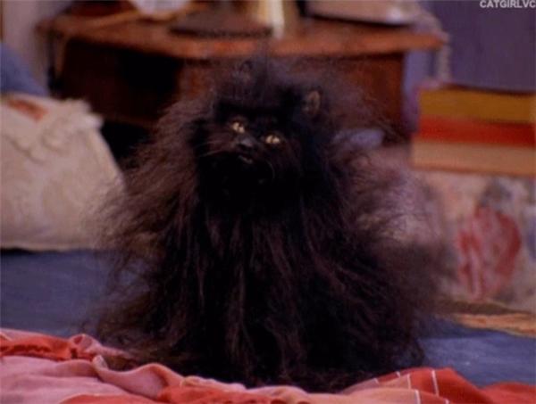 Những cô nàng tóc dài có thói quen gội đầu đêm mà lại còn lười sấy tóc, chải tóc thì sáng ra trông sẽ chẳng khác nào con mèo vừa đi qua phong ba bão táp cuộc đời về.
