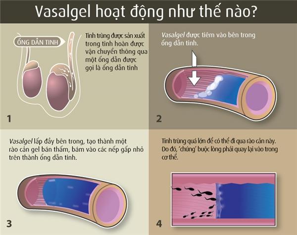 Cách hoạt động của loại thuốc tiêmVasalgel.