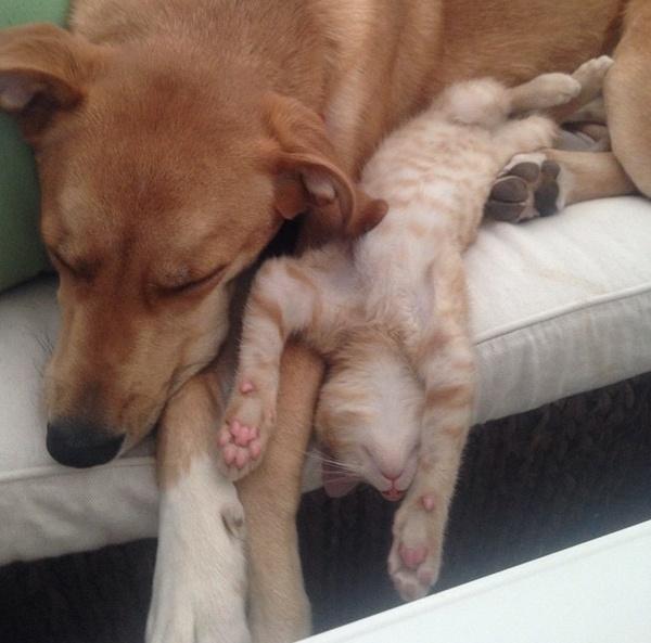 Ngủ cũng phải bon chen nằm sát nhau mới chịu.