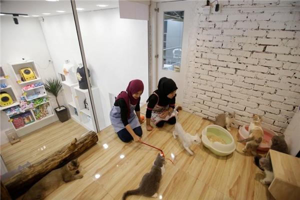 """Khách sạn Catzonia ở Damansara, gần Kuala Lumpur, có 35 phòng dành cho """"hội lắm lông""""."""