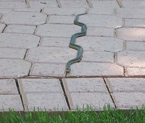 Đến rắn cũng ưa chuộng sự hoàn hảo nữa cơ đấy!